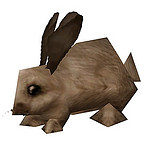 rabbit brown.jpg