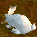 rabbit white.jpg